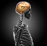 Human brain stock images