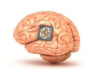 Human brain with computer chip Stock Photos