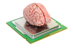 Human brain with computer processor, 3D rendering. On white background Royalty Free Stock Image