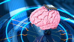 Human brain with computer processor. Royalty Free Stock Image