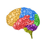 Human brain concept Royalty Free Stock Image