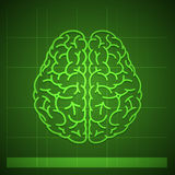 Human Brain Concept on Green Background stock photography