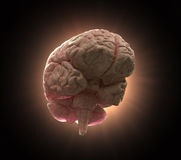 Human brain concept illustration Royalty Free Stock Image