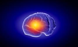 Human brain Royalty Free Stock Image