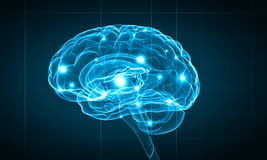 Human brain. Concept of human intelligence with human brain on blue background