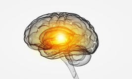 Human brain. Concept of human intelligence with human brain on white background