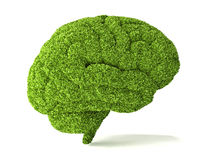 Human brain is covered with green grass. Stock Photos