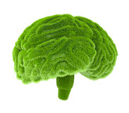 The human brain is covered with green grass Royalty Free Stock Photography