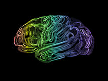 Human brain. Creative concept of the human brain Stock Images