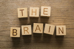Human brain. Creative concept of the human brain Royalty Free Stock Photos