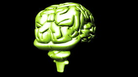 Human Brain 2 Stock Images