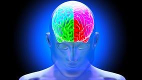 Human brain 3D render. Human brain on dark background. 3D render Royalty Free Stock Images