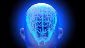 Human brain 3D render. Human brain on dark background. 3D render Stock Illustration