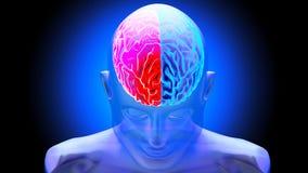 Human brain 3D render. Human brain on dark background. 3D render Royalty Free Stock Image