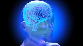 Human brain 3D render. Human brain on dark background. 3D render Royalty Free Stock Photography