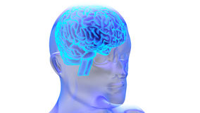 Human brain 3D render. Human brain isolated on white background. 3D render Stock Image