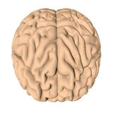 Human brain 3D render. On white background Royalty Free Stock Photos
