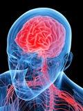 The human brain vector illustration