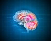 Human brain. Detailed 3d illustration on a blue radial background Stock Image