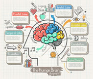 The Human Brain Diagram Doodles Icons Set. Royalty Free Stock Images