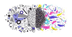 Human brain divided into right and left cerebral hemispheres responsible for different functions - creativity or arts. And logic or logical thinking royalty free illustration