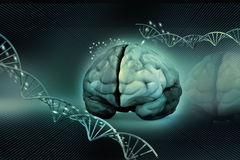 Human brain and dna Royalty Free Stock Photo