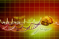 Human brain and dna Stock Image