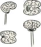 Human Brain Doodle Stock Images