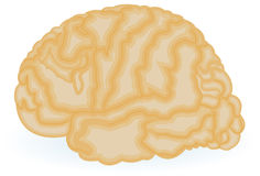Human brain drawing Royalty Free Stock Photography