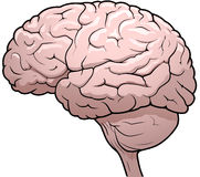 Human Brain Drawing. Side view drawing of a human brain Stock Photos