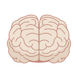Human brain in flat style. Vector illustration. Front view. Stock Image