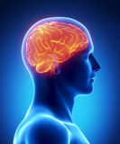 Human brain glowing lateral view stock illustration