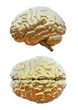 Human brain golden Stock Photography