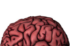 Human brain gyri close-up. Anatomical view 3D illustration on white background vector illustration