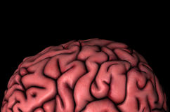Human brain gyri close-up view. Human brain gyri close-up anatomical view 3D illustration on black background stock illustration