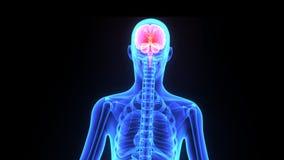 Human Brain stock video footage