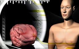 Human brain with human body Royalty Free Stock Image