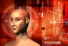 Human brain and  human body Royalty Free Stock Photos
