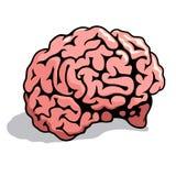 Human brain 003. Human brain. Realistic Vector illustration Royalty Free Stock Photo
