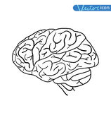 Human brain icon, vector illustration Stock Photography