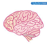 Human brain icon, vector illustration Stock Photos