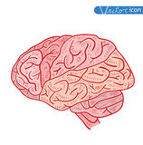 Human brain icon, vector illustration Royalty Free Stock Images