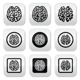 Human brain icons set - intelligence, creativity concept Stock Images