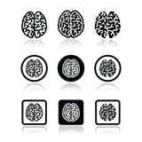Human brain icons set - intelligence, creativity concept Stock Photography