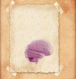 Human brain - illustration in frame Stock Photos