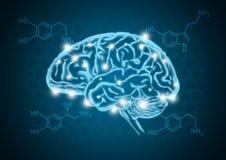 Human brain illustration with hormone biochemical concept background. Human brain illustration with hormone biochemical dopamine, serotonin and norepinephrine vector illustration