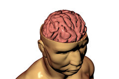 Human brain inside head Stock Photo