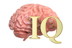 Human brain and IQ word, 3D Royalty Free Stock Photo