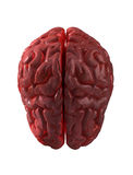 Human brain isolated Royalty Free Stock Image