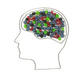 The human brain is laid out from the berries, healthy lifestyle. Royalty Free Stock Photo